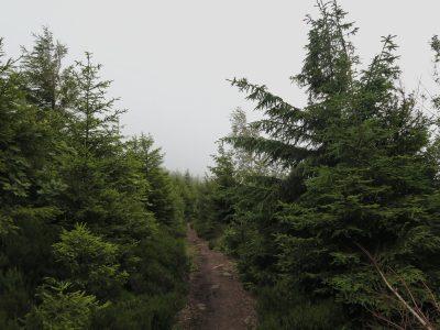 Schmale Wanderwege im Schwarzwald