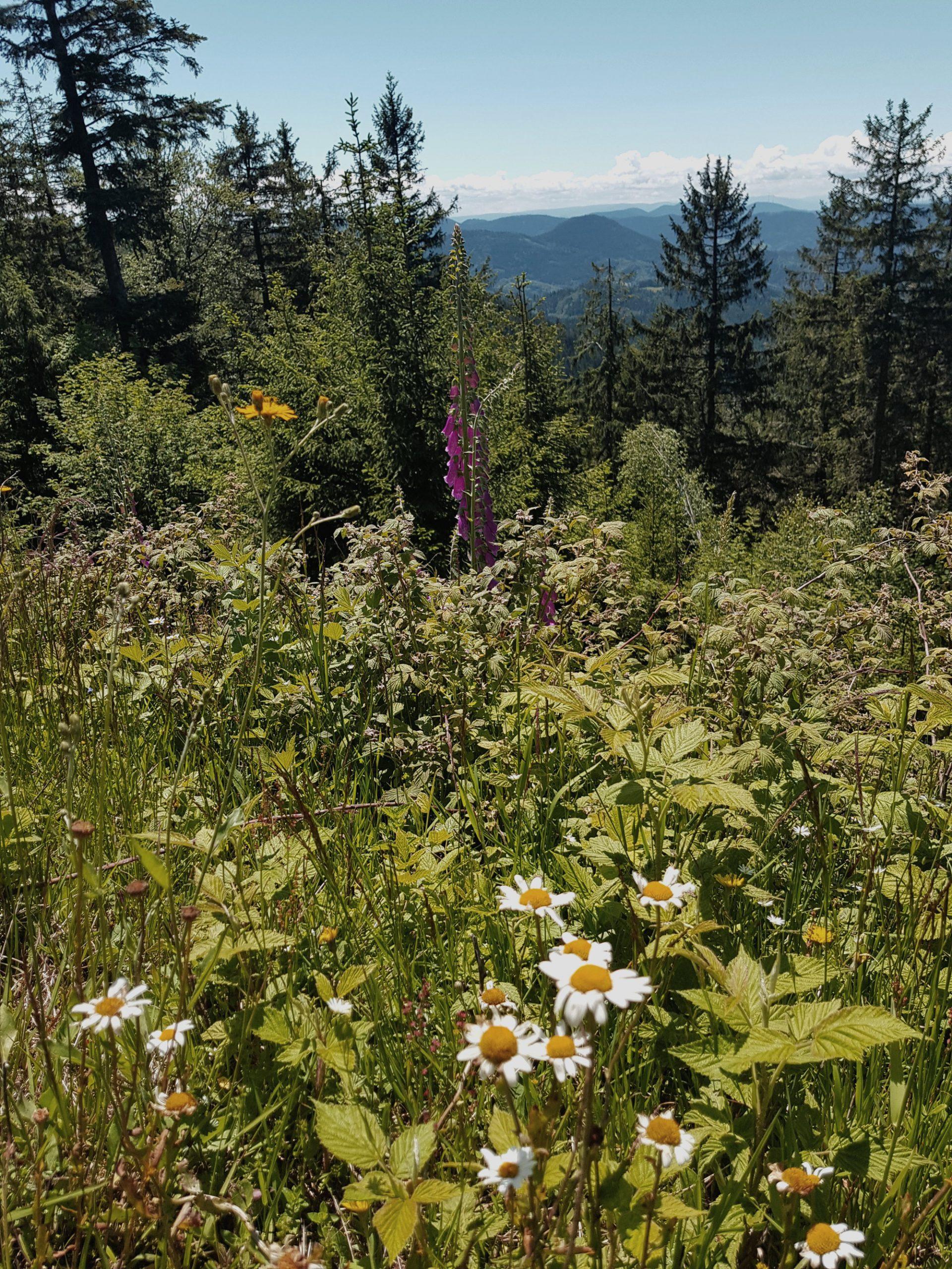 Trekking im Schwarzwald, Blüte, Natur, Pflanzen, Ausblick, Berge
