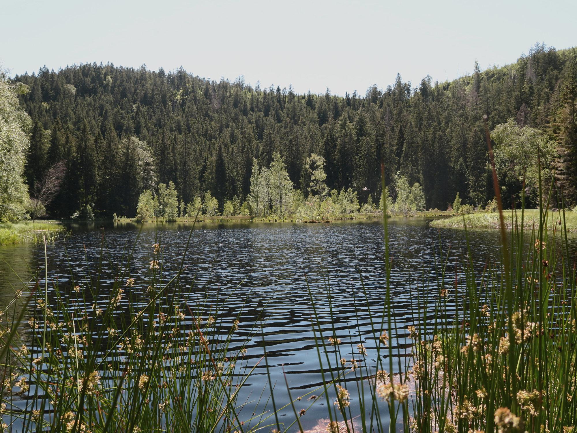 Am geschützten Buhlbachsee im Schwarzwald