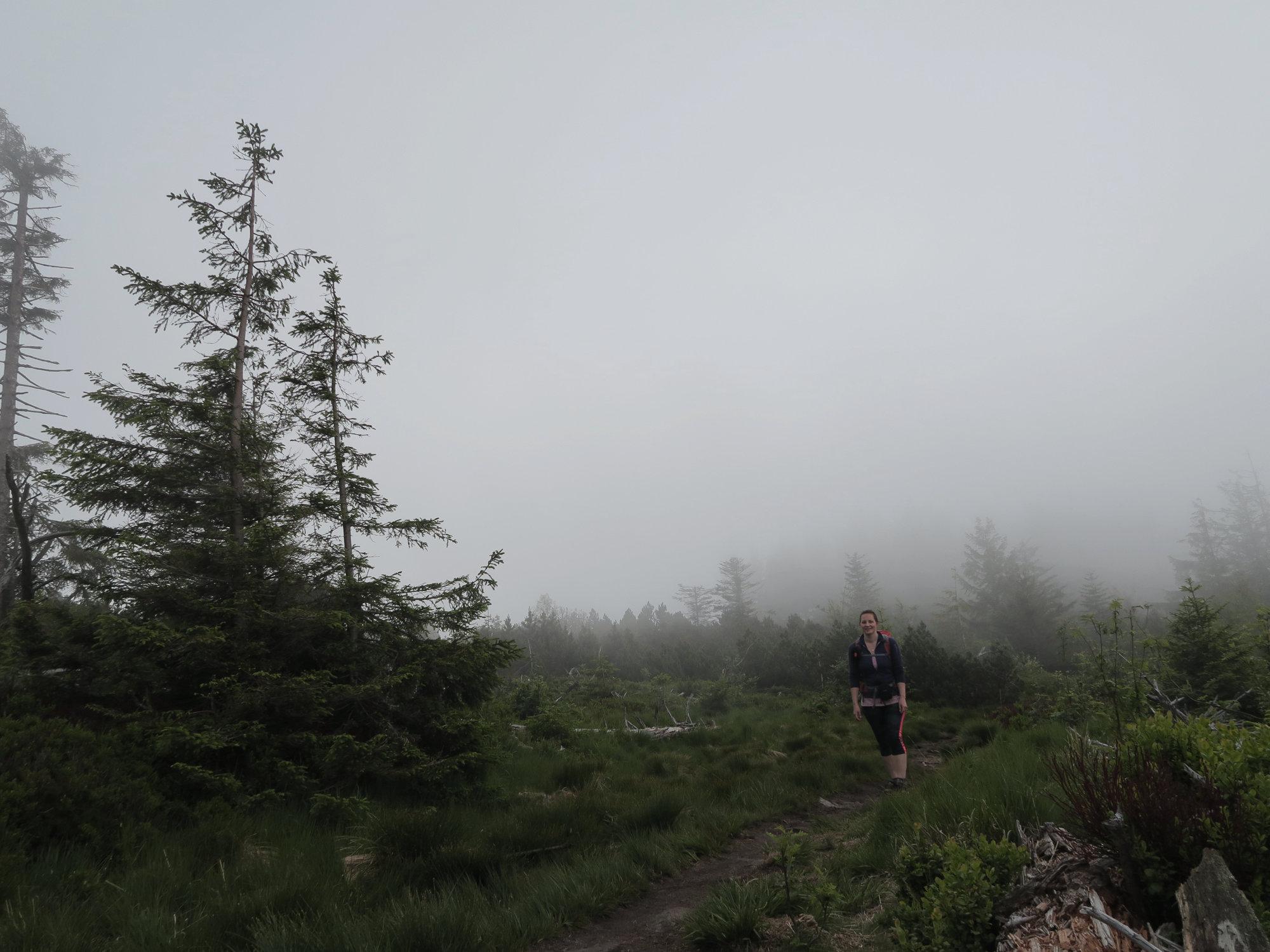 Nebliger Morgen beim Trekking im Schwarzwald