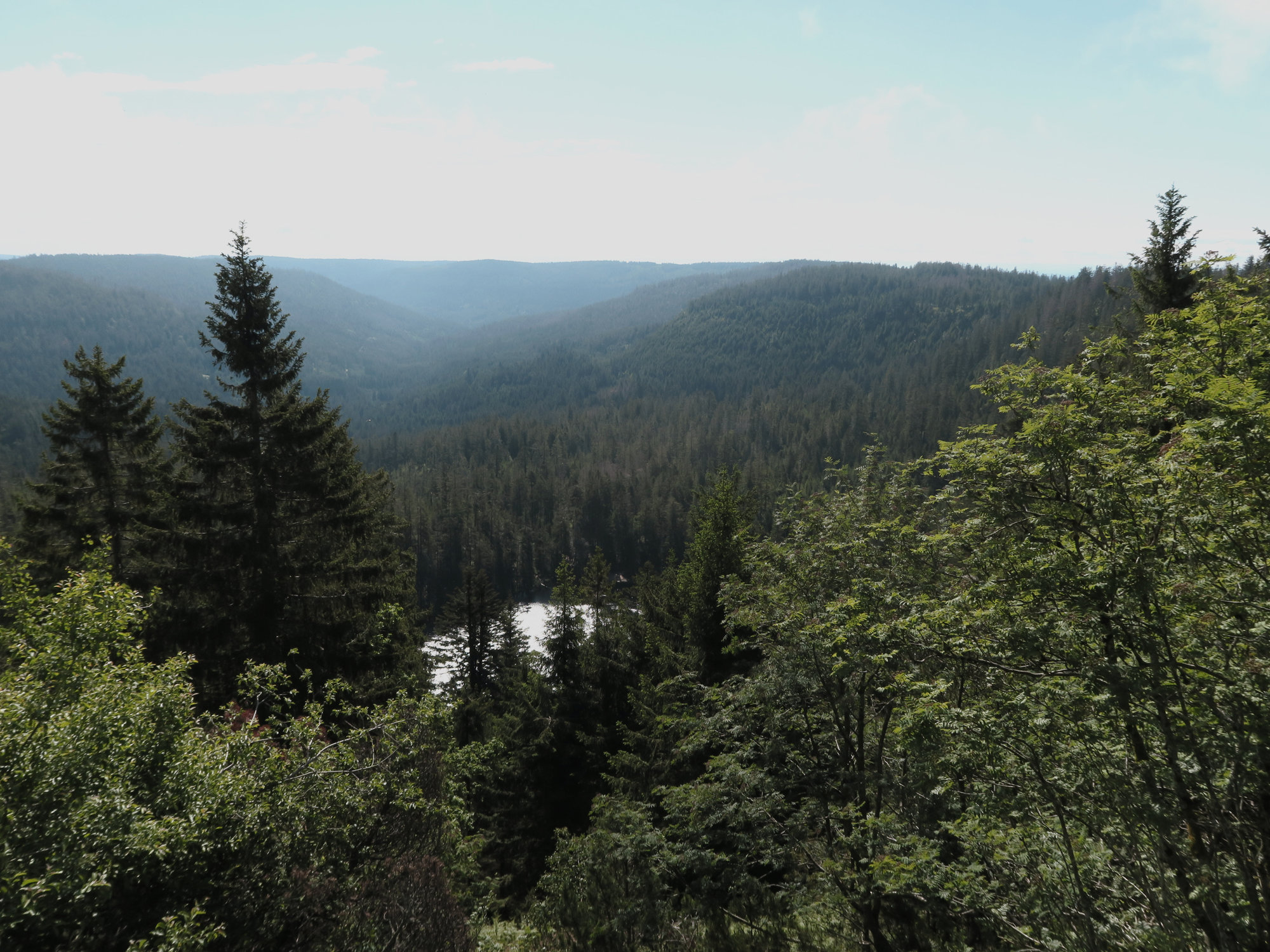 Wilder See und Bannwald im Schwarzwald