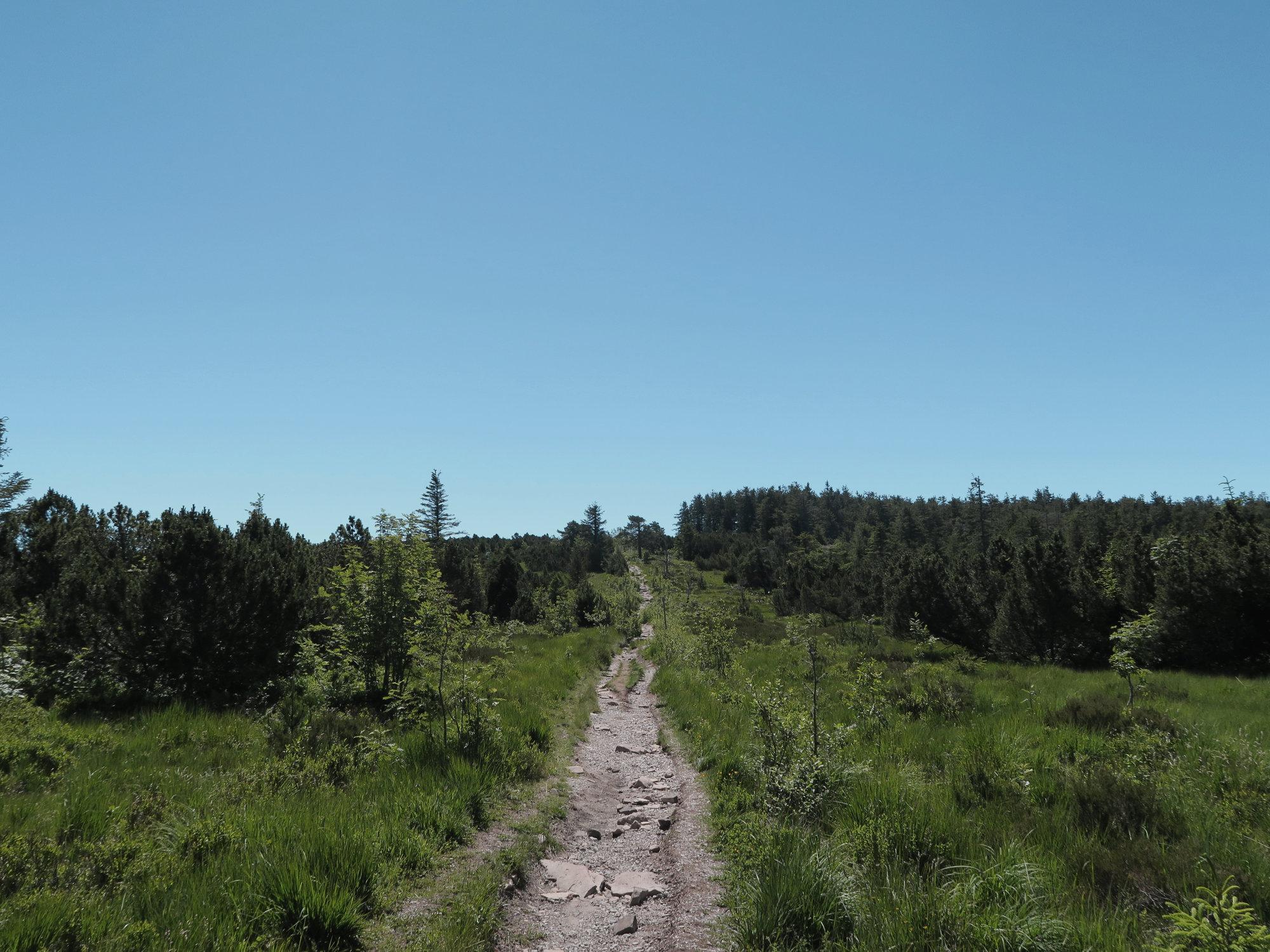 Weg auf den Schliffkopf im Schwarzwald