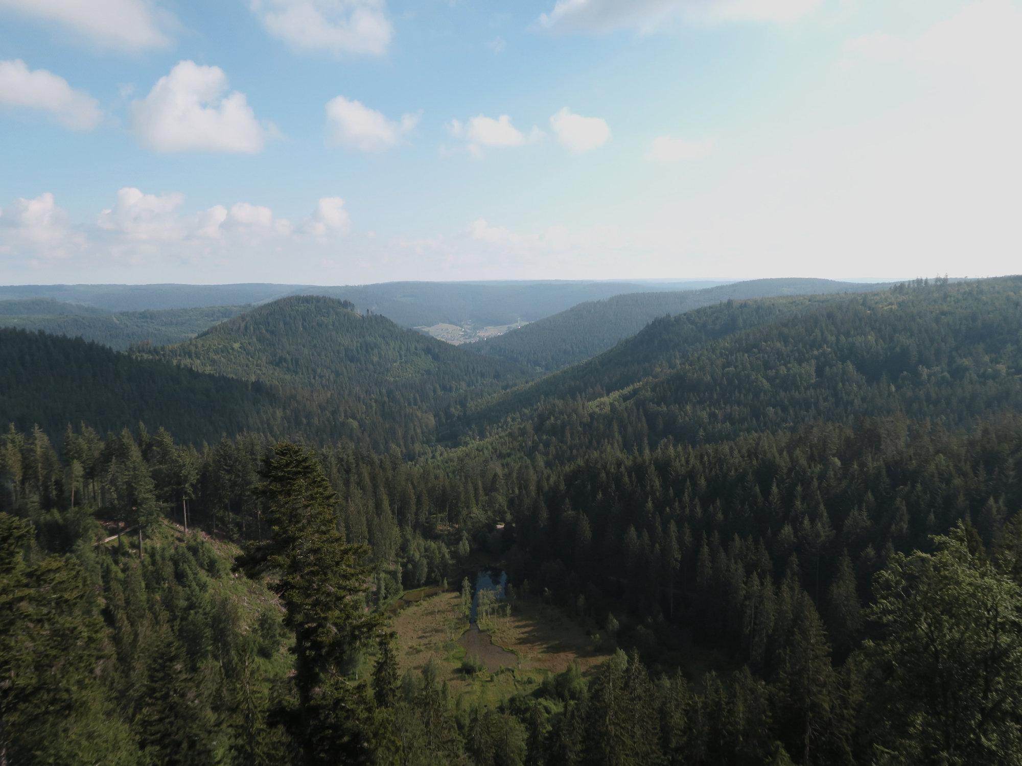 Blick von der Aussichtsplattform Ellbachsee