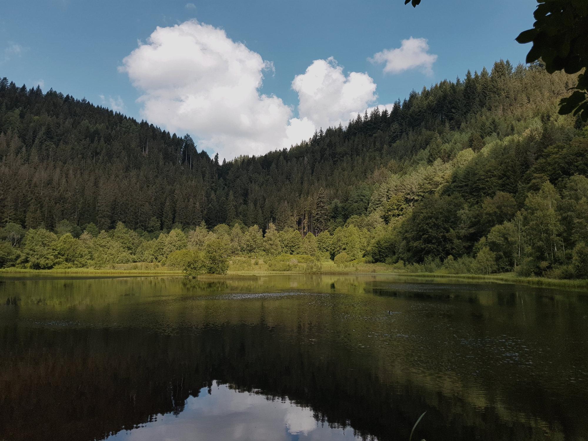 Sankenbachsee bei Baiersbronn