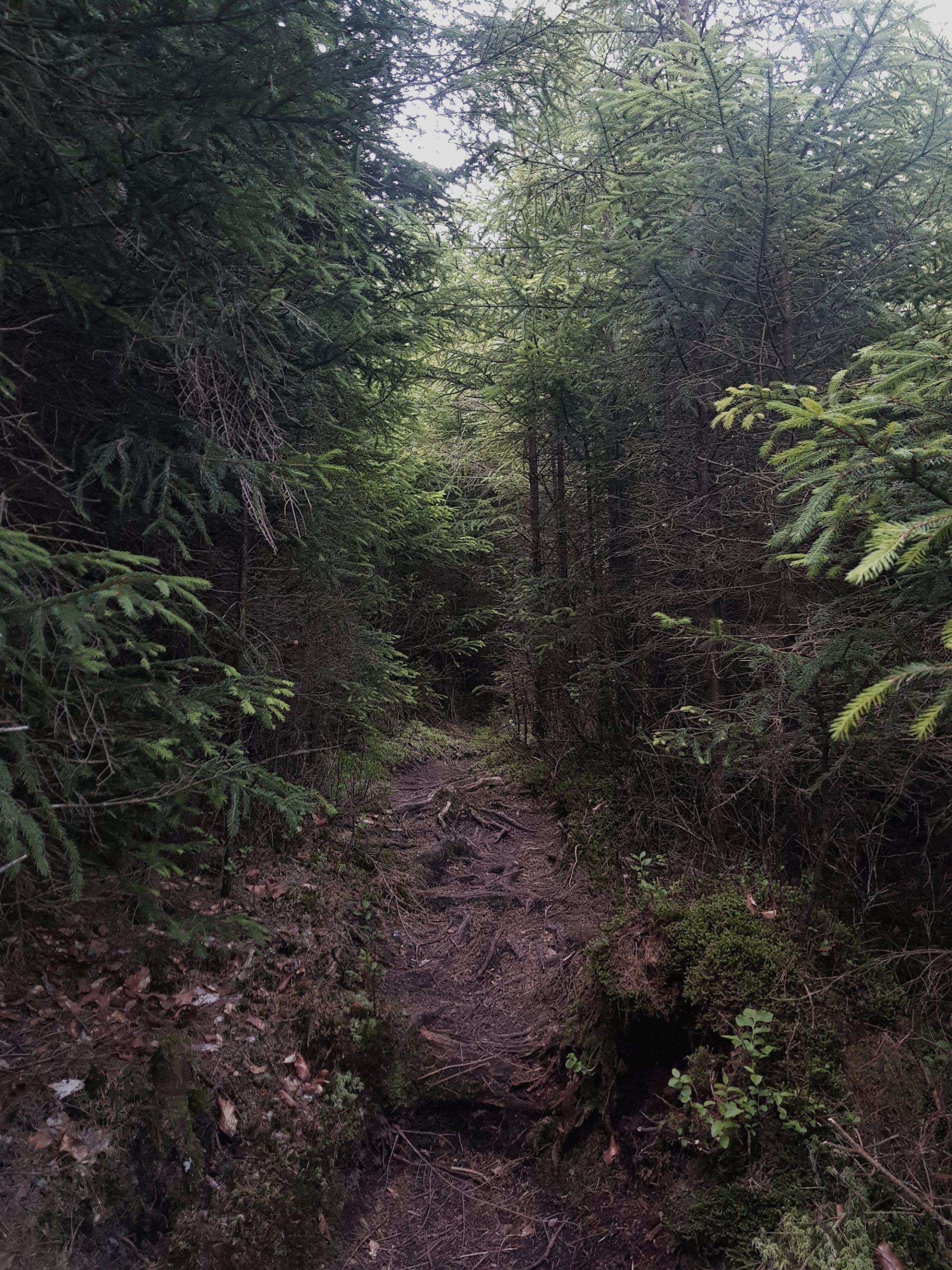 Der Abenteuerpfad zum Ellbachsee im Schwarzwald
