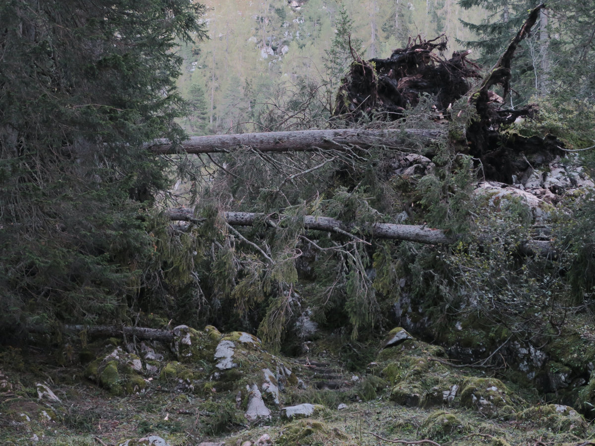 Umgestürzte Bäume sind die heutigen Hindernisse bei der Königssee Umrundung