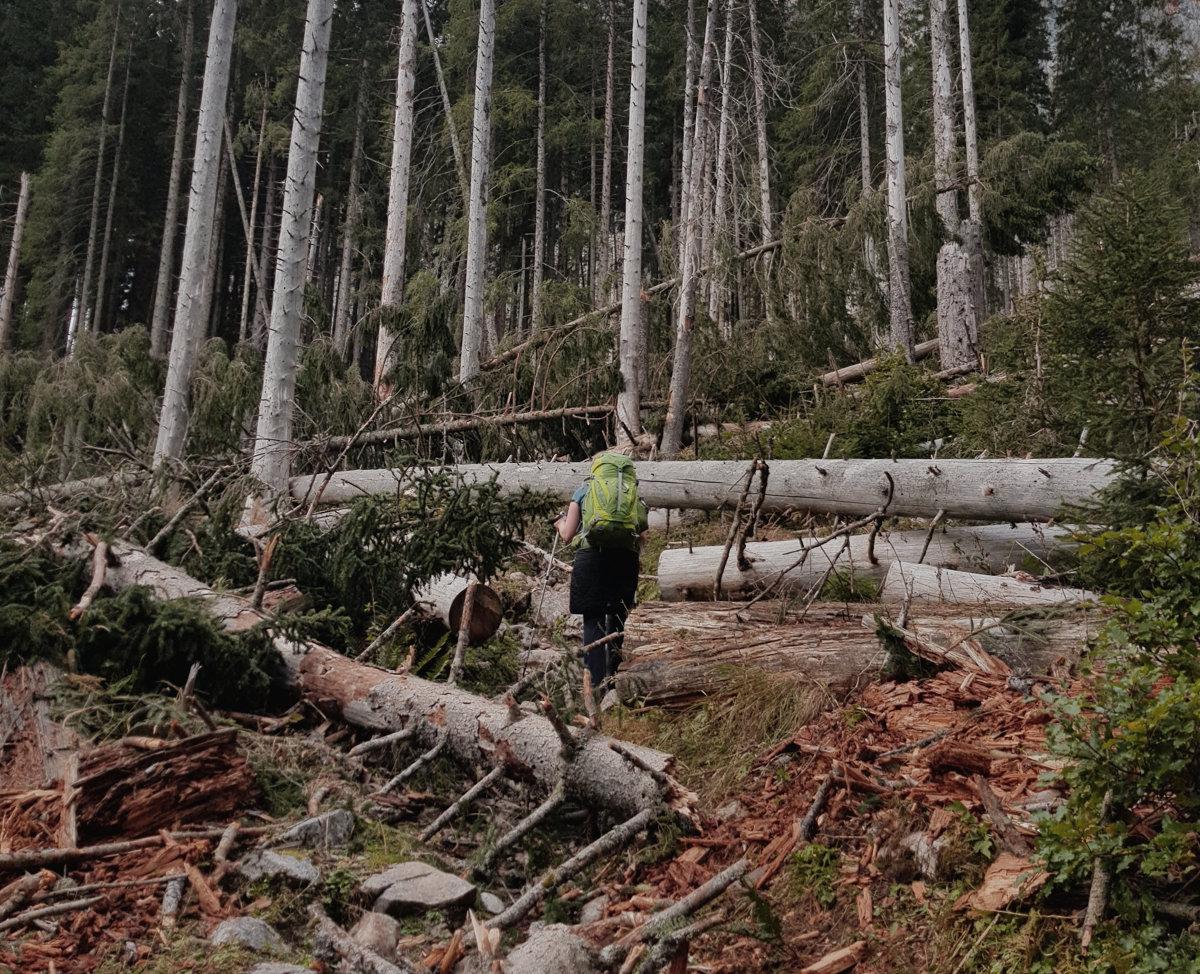 Umgestürzte Bäume auf dem Weg zur Gotzenalm