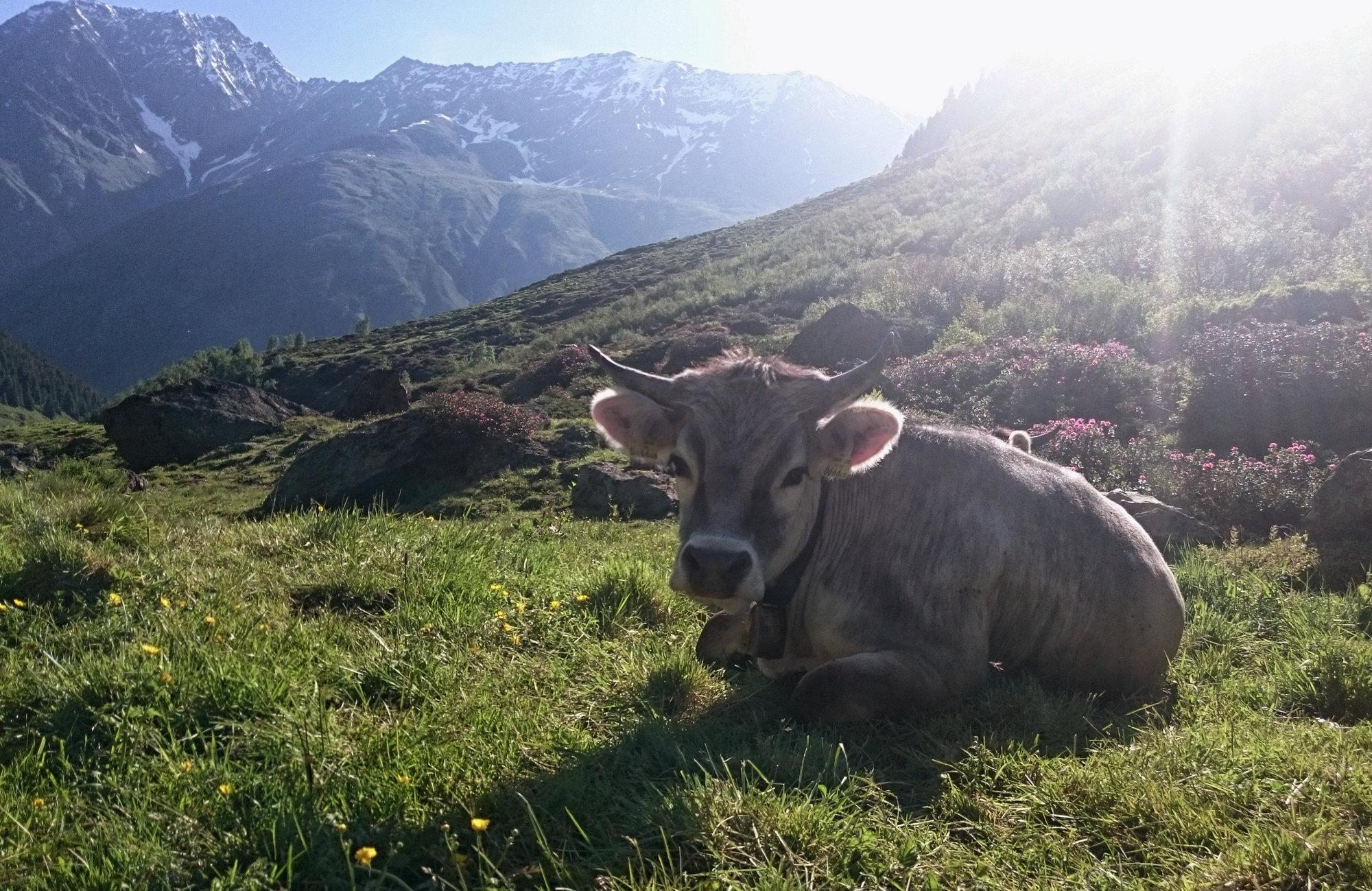 Österreich Wanderungen Pitztal Taschachhaus